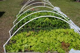 Square Foot Square Foot Gardening Anyone Winter Prevent Seeds House