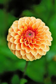 alan titchmarsh on growing summer flowering bulbs in your garden
