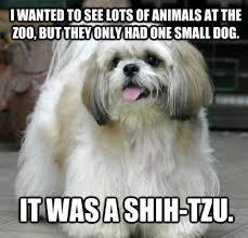 24 amazing awful dog jokes for national joke day rover com