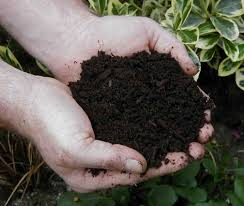 food and yard waste composting in thurston county