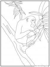 dessins de singe à colorier az coloriage