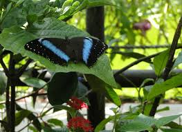 butterfly world coconut creek florida youtube