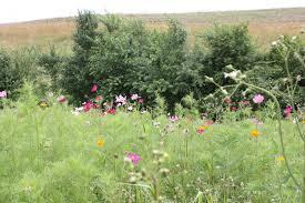 native plants of pa the importance of pollinators nrcs pennsylvania