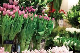 Plant Delivery Melbourne Florist Cbd Flower Delivery Melbourne Flowers