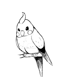 parakeet sketch by serj tankian fan09 on deviantart