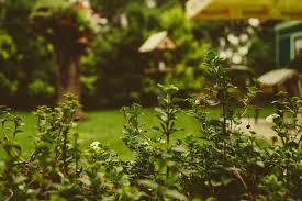 best 100 garden pictures u0026 images download free photos on unsplash