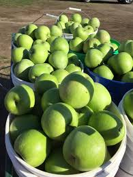 thanksgiving week hours we still apples available beilke