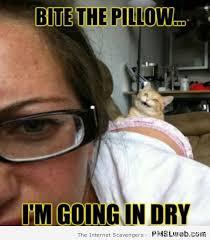 Naughty Funny Memes - 35 naughty kitty meme pmslweb