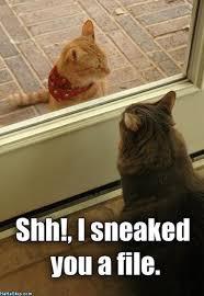 Sneaky Cat Meme - sneaky cats jpg