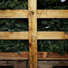 picking out the perfect christmas tree the seattle times
