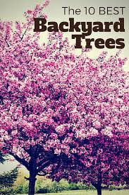 10 of the best trees for any backyard yards plants and house