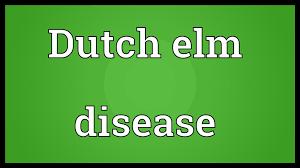 dutch elm disease meaning youtube