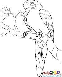 rainforest coloring pages healthychild net