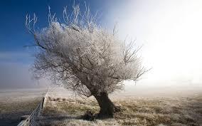 frosty tree fence wallpaperspics