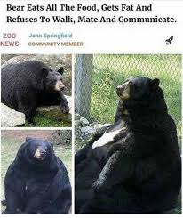 Bear Memes - dopl3r com memes bear eats all the food gets fat and refuses
