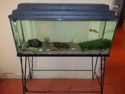 tropical fish 92cm 33m 40cm fish tank termostat to clean