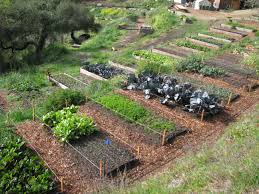 raised small backyard vegetable garden ideas in wooden container