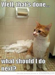 Toilet Paper Funny 20 Funny Cats Play With Toilet Paper Make You Laugh
