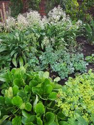 friends of peacehaven botanic park inc new members new plants syzygium paniculata u0027backyard bliss backyard bliss lilly pilly