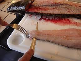 comment cuisiner le silure découper des filets de sandres