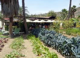 family farm and garden san jose del cabo mexico flora farm and field kitchen jeans