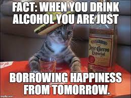 Drunk Cat Meme - drunk cat meme generator imgflip