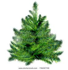 spruce tree stock images royalty free images vectors