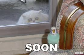 Soon Cat Meme - soon cat meme cat planet cat planet