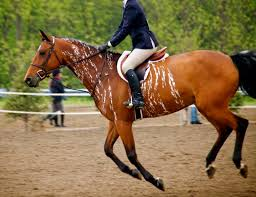 122 best horse colors images on pinterest horses beautiful