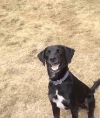 Confused Dog Meme - blinking smiling dog gif reaction album on imgur