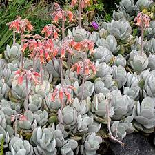 Types Of Community Gardens - best 25 types of succulents plants ideas on pinterest