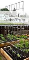 Make Your Own Cucumber Trellis Best 25 Bean Trellis Ideas On Pinterest Pea Trellis Pole Beans