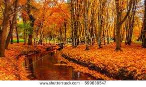 wonderful autumn landscape beautiful trees colored stock photo