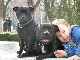 the best family dogs 10 breeds for homes with children