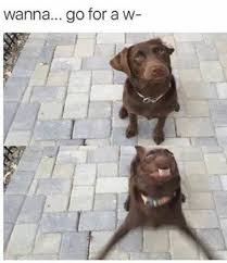 Dog Lover Meme - 21 hilarious memes that dogs and dog lovers can relate to