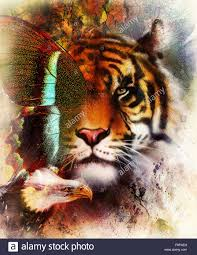 portrait tiger with eagle and butterfly wings color abstract stock