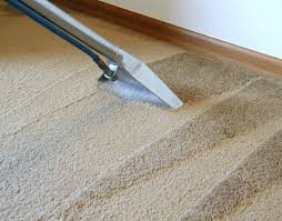 Dog Urine On Laminate Flooring How To Clean It Blog The Carpet Cleaner