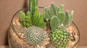 1 month update cactus terrarium from htt ep 4 youtube