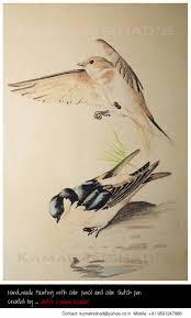 by kamal nishad pencil color painting sparrow gauraiya birds