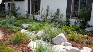 california native plant garden a mix of dry shade plants california native dry shade garden