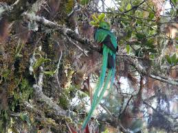 native plants of costa rica 11 awesome native animals you must see in costa rica