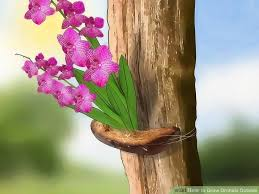 What Is An Orchid Flower - how to grow orchids outside 8 steps with pictures wikihow