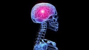 3d Head Anatomy Brain Anatomy Medical Head Skull Digital 3 D X Ray Xray