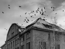 halloween black birds free images bird black and white building atmosphere spooky