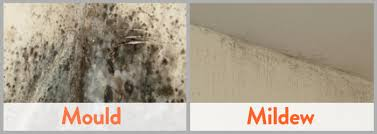 how to clean mould from bathroom tiles and walls drench the
