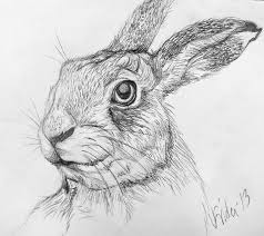 drawn rabbit hare pencil and in color drawn rabbit hare
