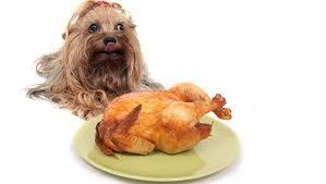7 thanksgiving food and treat recipes dogtime
