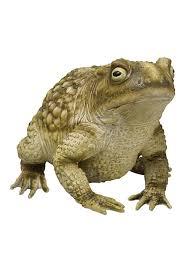 foam toad statue