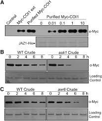 Anti Flag Affinity Gel The Arabidopsis F Box Protein Coronatine Insensitive1 Is
