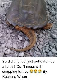 Turtle Memes - 25 best memes about snapping turtle snapping turtle memes